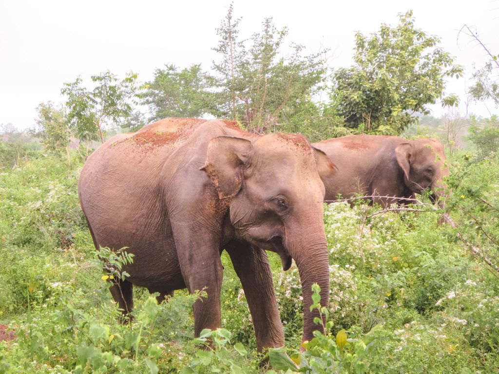 On Safari at Uda Walawe