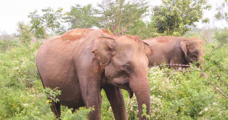 On Safari in Sri Lanka at Uda Walawe National Park