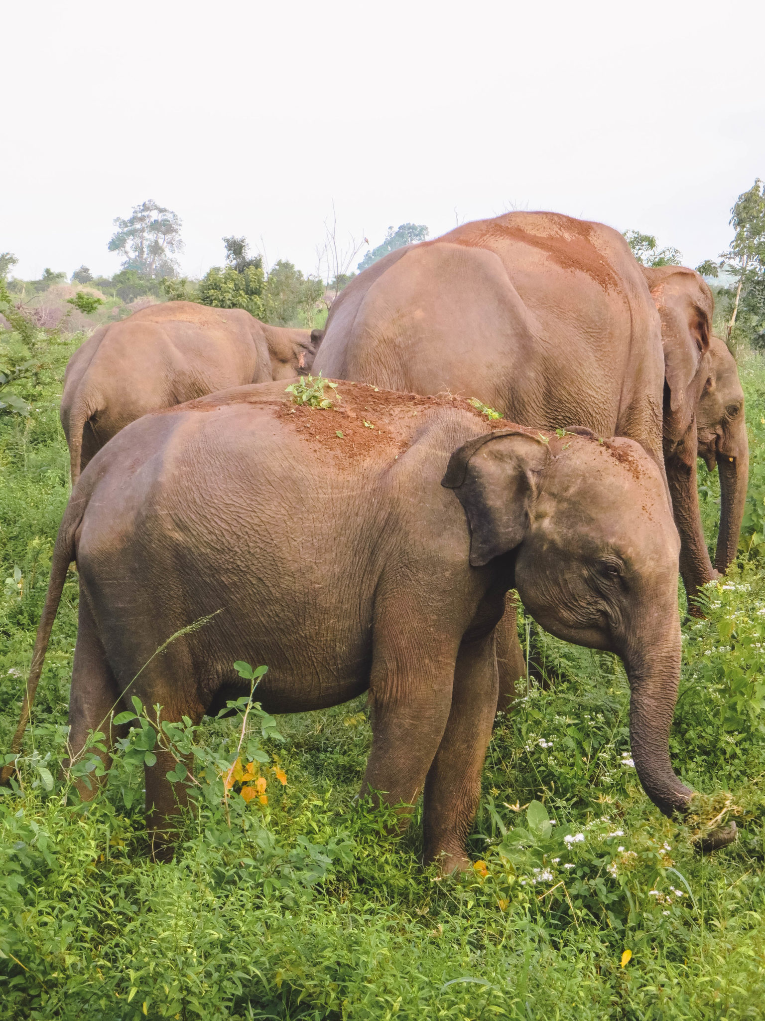 jana meerman uda walawe safari sri lanka-1
