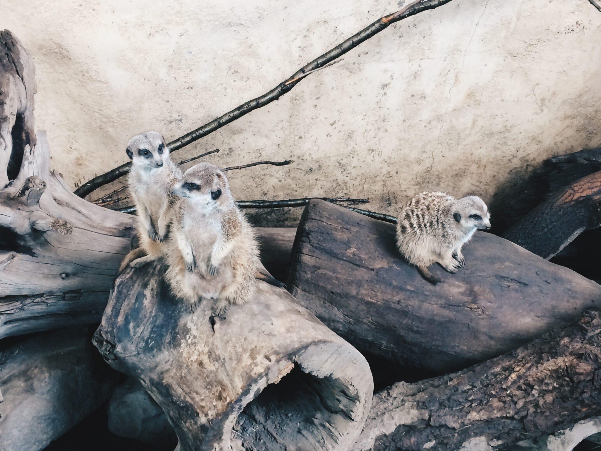 jana meerman calgary zoo