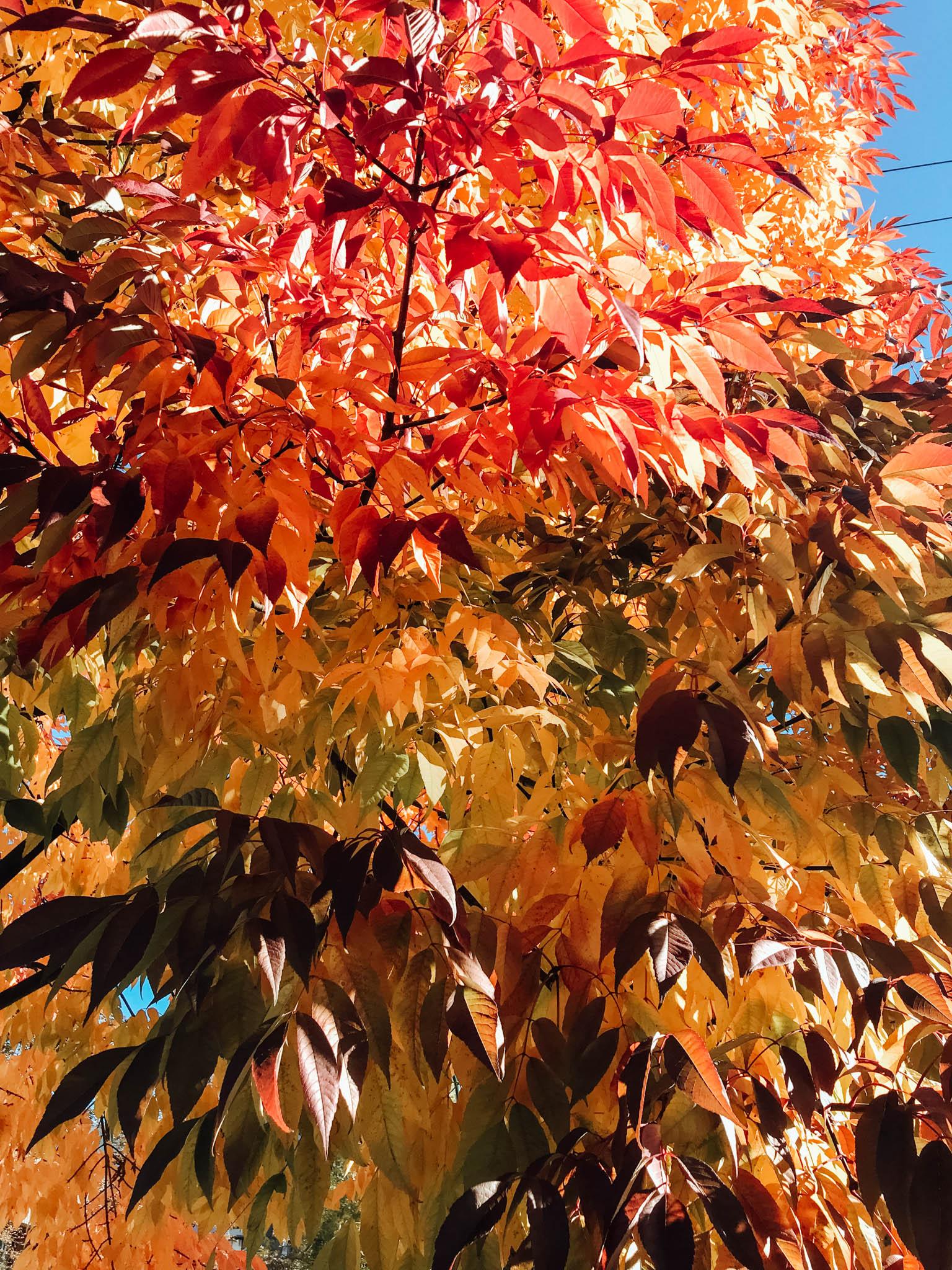 jana meerman autumn fall-4