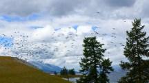 Mongolia-altai-peaks-lake-Khoton-birds-thegeneralist