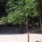 Mein Freund, der Park
