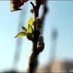 Frühlingsfotos aus Istanbul