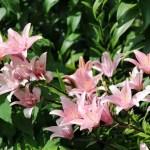 Travel: Cornell Botanic Gardens in Ithaca, NY