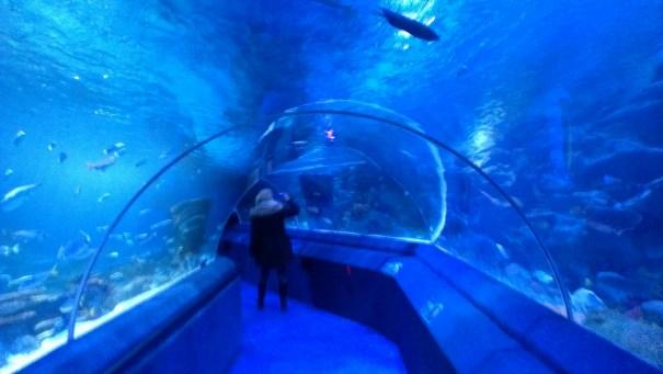 SeaLife - Tunel sa panoramom od 270 stepeni, dug 83 metra