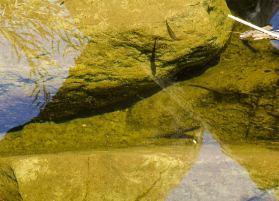 fish in creek