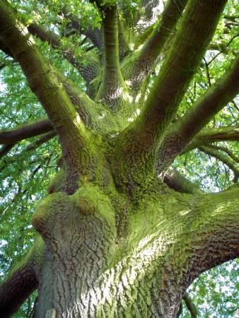 11 up the tree