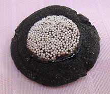 Picture of chocolate snowcap cookie