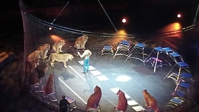 5 #spon ringling brothers lions and tigers