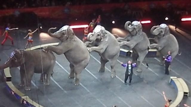 7 #spon ringling brothers elephants