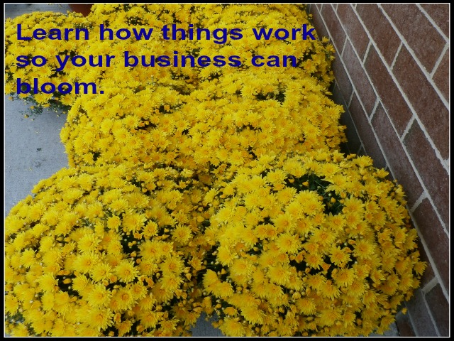 learn how your business works www.janeanesworld.com
