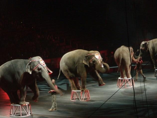 021215 circus elephant www.janeanesworld.com