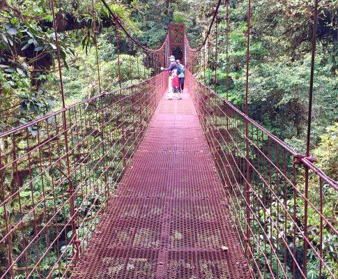 Costa Ricas tågede Monteverde