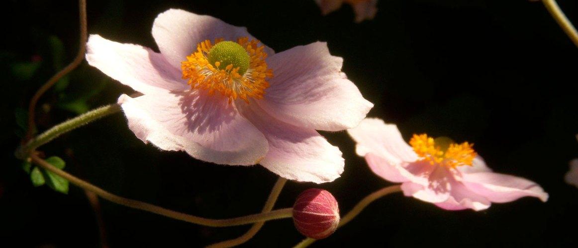 flowers3-b