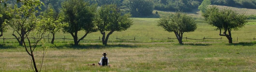 Ocamora meditation cropped