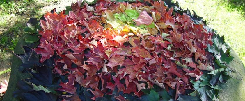 leaf mandala cropped