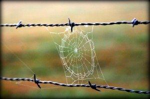 Image: iStockphoto - spfoto