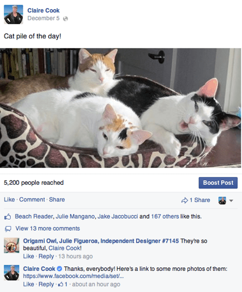 Claire Cook and cats on Facebook