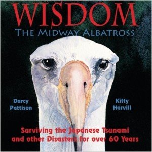Wisdom the Midway Albatross