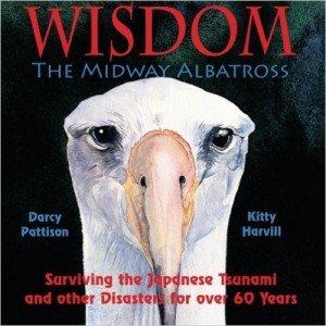 Wisdom the Midway Albatross