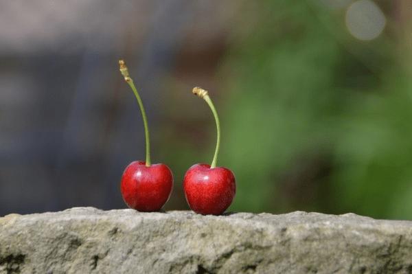 Two cherries on a rock shelf