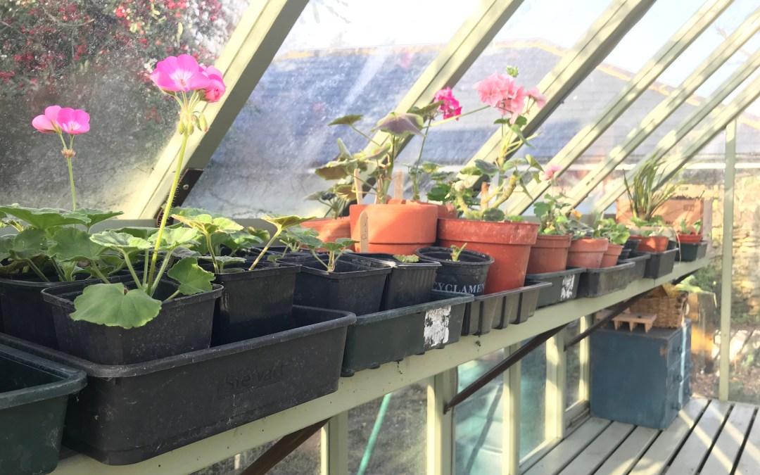Garden Cuttings