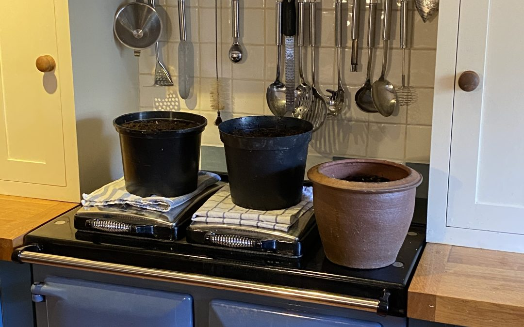 Defrosting pots again this year?