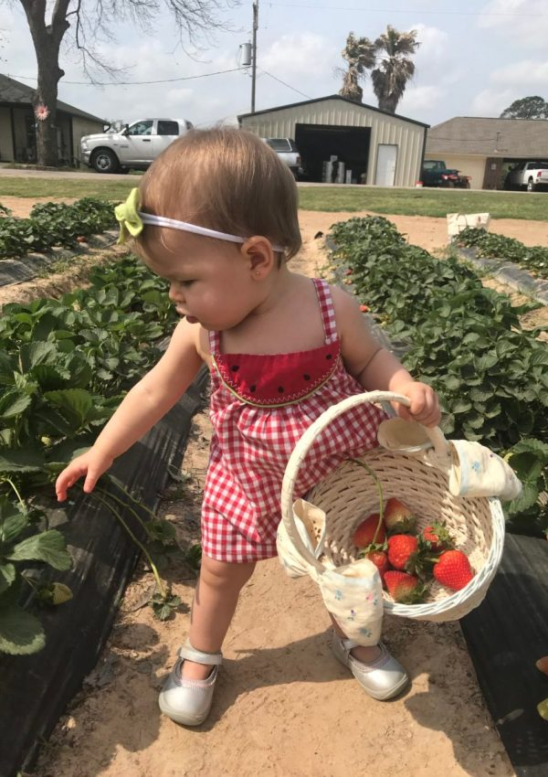 Strawberry Picking at Atkinson Farms