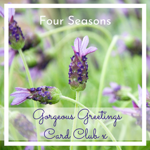 Photograph of French Lavender by Jane Mucklow, Card Club Four Seasons image