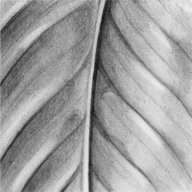 Texture Series, #8, graphite, 3x3 inches, SOLD