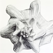Shell Series, #4, charcoal, 24 x 24 inches, SOLD
