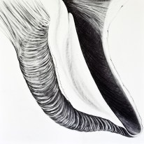 Shell Series, #6, charcoal, 24 x 24 inches