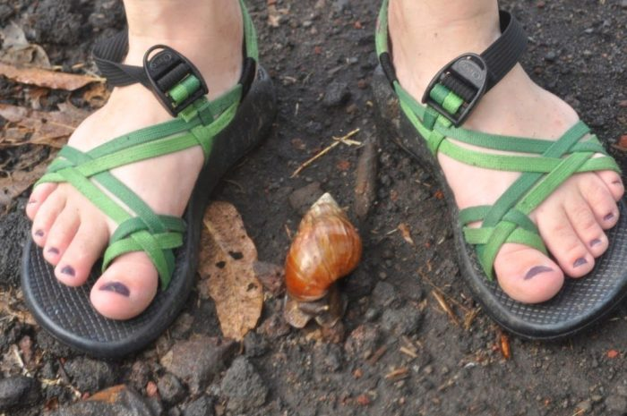 Green Chaco sandals next to a snail in Bali packing light tips and tricks for women travelers