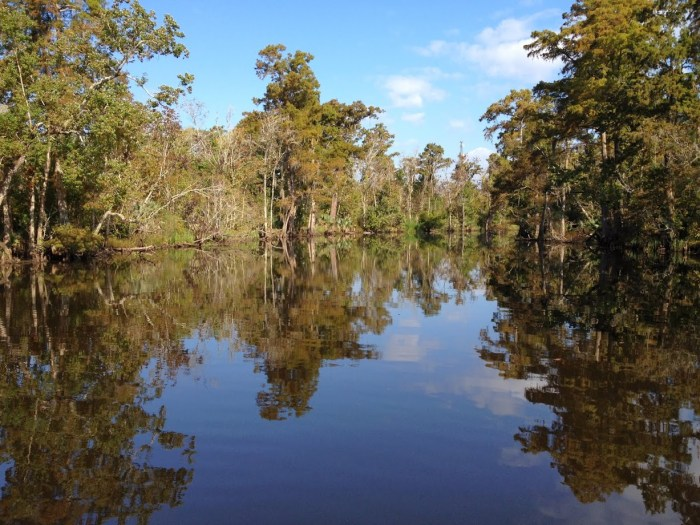 Louisiana swamp road trip through the south