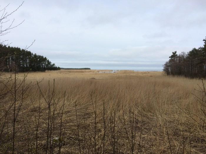 Baltic Sea in Lahemaa National Park biking in Estonia