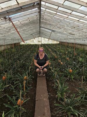 São Miguel Island, Azores, pineapple plantation
