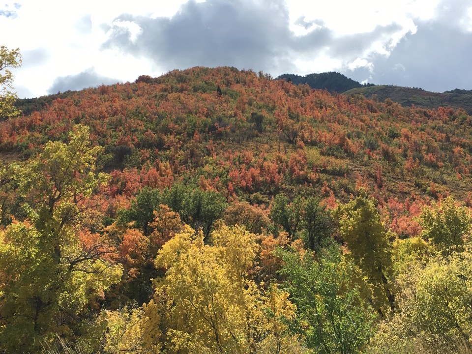 Fall colors, Wasatch Mountains