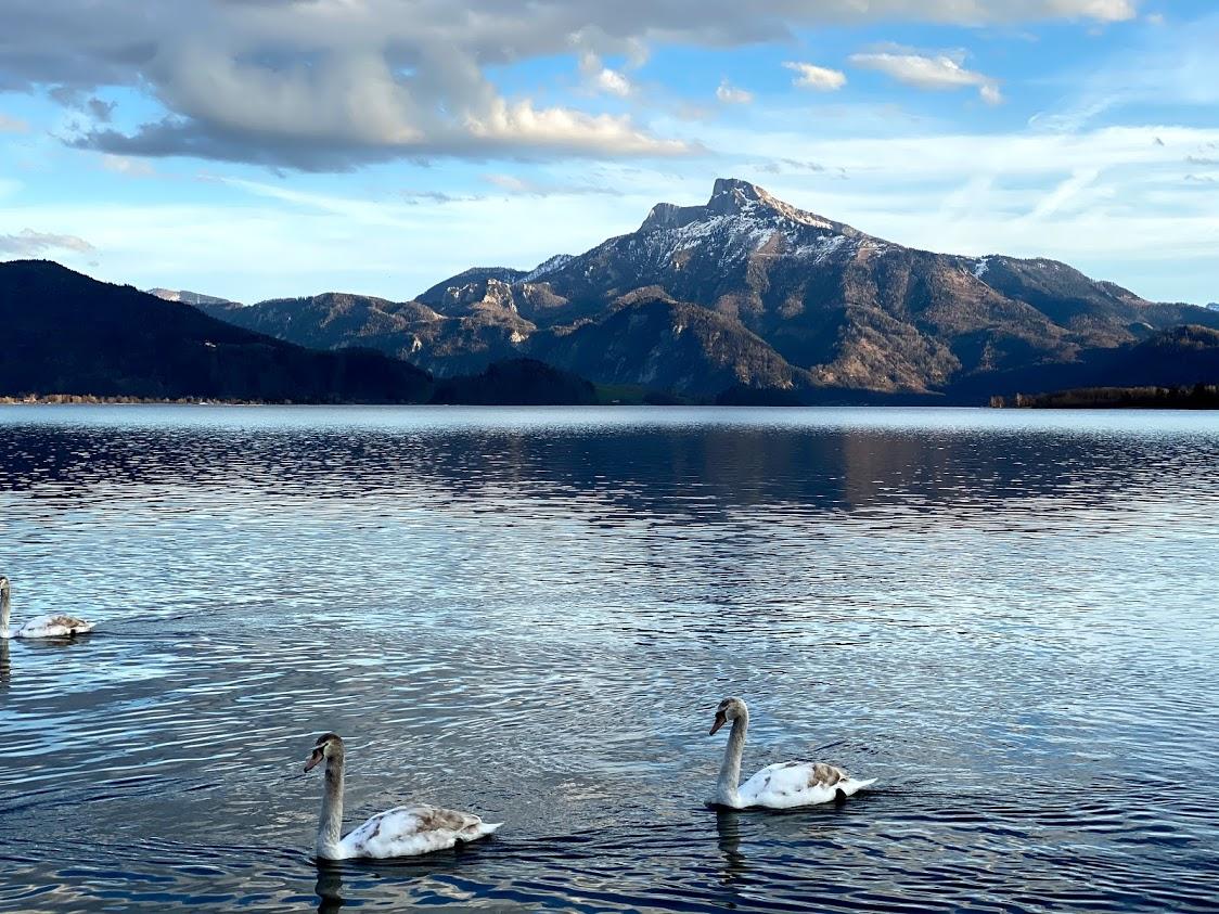 Austrian Alps Lake District Swans