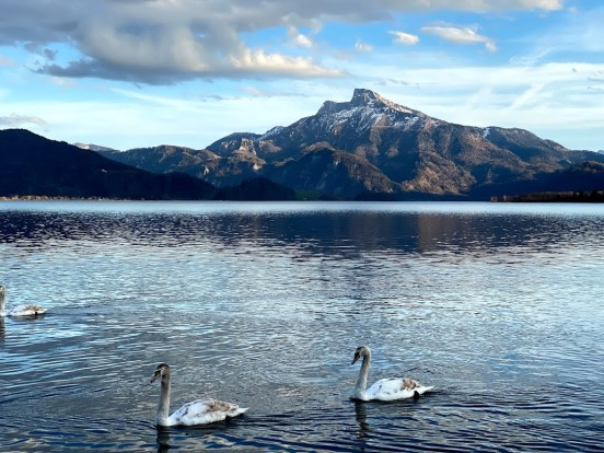 Austrian Alps Lake District Swans