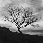 murlough bay church tree (2)