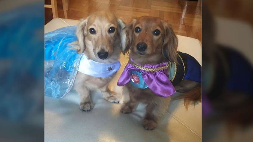 Frozen Princess Pet Halloween Costume