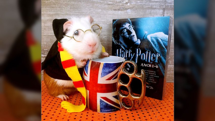 Harry Potter Pet Halloween Costume
