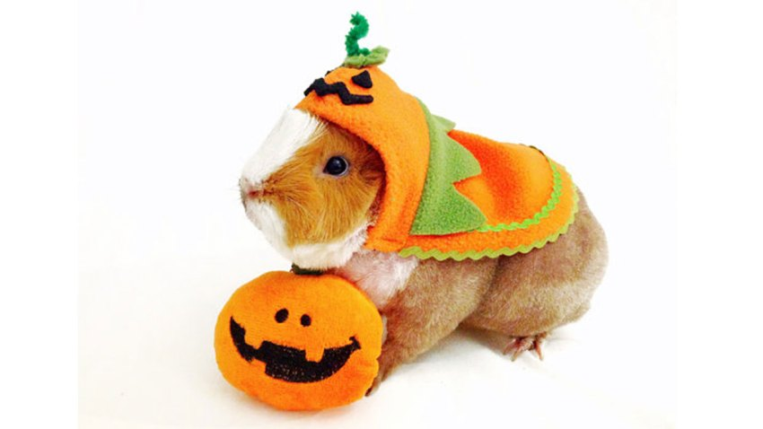 Pumpkin Halloween Costume for Pets