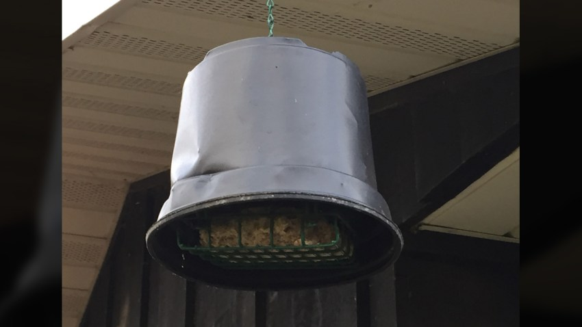 Suet Feeder Hanging