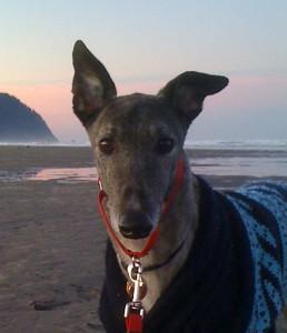 Argos the Greyhound