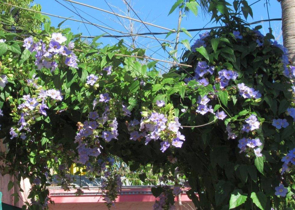 kw flower 2