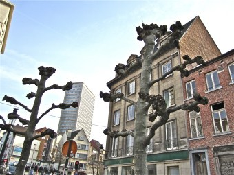 brussels-trees-8