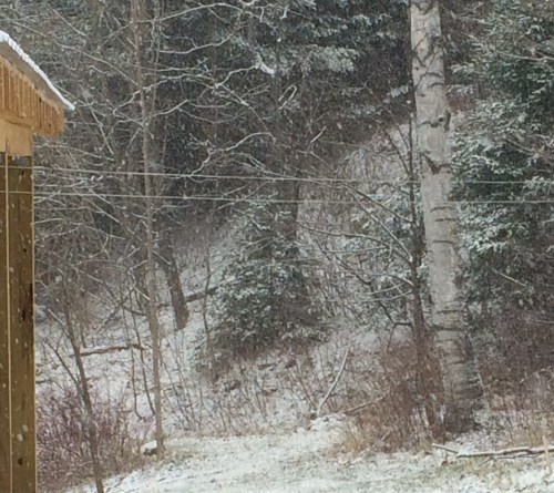 This is what an empty clothesline on a snowy April day looks like. Can you even see it?