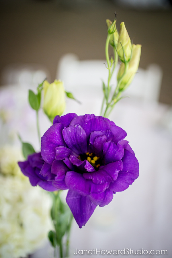 Purple, green and white reception decor
